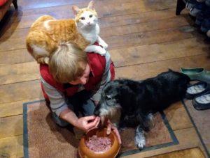 Der schwarze Hund Strolchie wird per Hand gefüttert, während auf der Schulter der Frau eine Katze sitzt