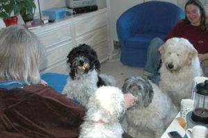 Hundeforum, zur Sterbebegleitung. Treffen mit HIlde Gasthund, Wilma, Carena und Sancho, die 4 Hunde warten geduldig auf Leckerchen von Hilde