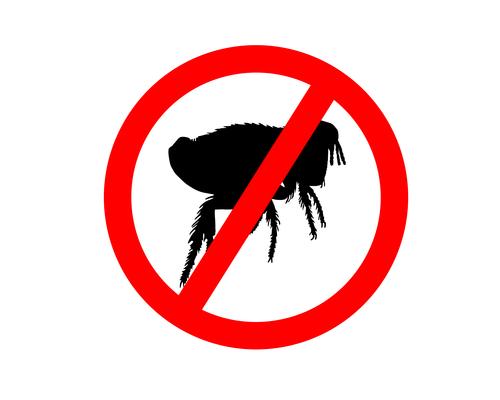 Gegen Flöhe behandeln: Kieselgur statt Nervengift